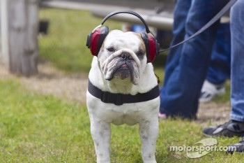 A four legged NASCAR fan
