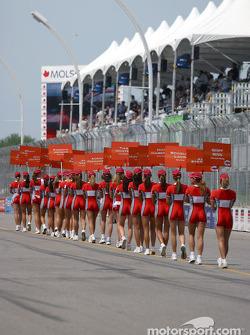 Molson Indy grid girls