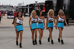 The lovely paddock girls