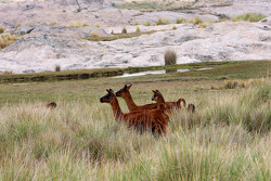 Argentina wild life