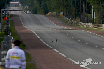 Froie gras waiting to happen: ducks cross the track a few seconds before the start of the session