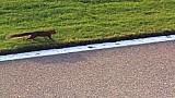 Squirrel wreaks havoc during Cup race - 2014 Atlanta