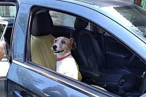 Нельсіньо Піке в Сантьяго врятував собаку – пес знайшов новий дім