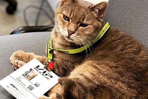 El secreto del gato de la fortuna en Imola