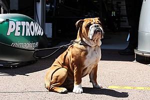 Собака Хемілтона заробляє $700 на день