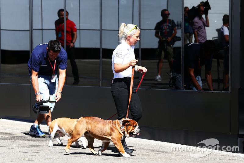 Roscoe e Coco - i cani Lewis Hamilton, Mercedes AMG F1