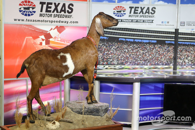 A stuffed goat presented by Texas Motor Speedway president Eddie Gossage