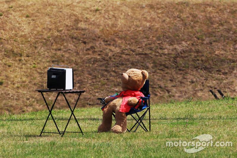 دُمية دُب تشاهد التلفاز