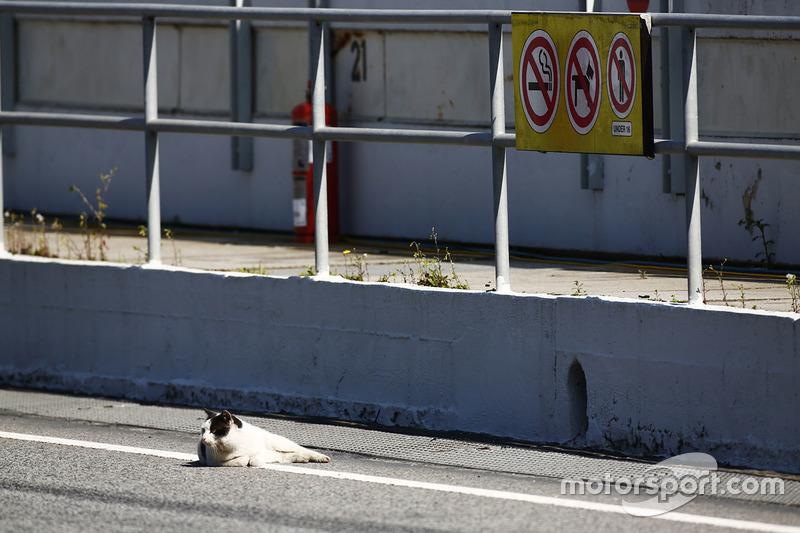 Un gato descansa en el pit lane