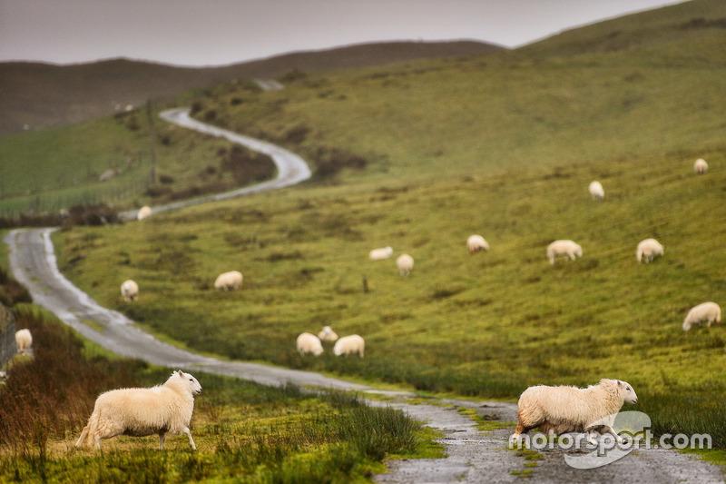 Первая гонка на «Сильверстоуне» прошла еще в 1947 году. В том заезде на летное поле часто выбегали овцы, одну из которых местный гонщик-любитель Морис Джохан сбил. После этого та гонка получила известность под названием «Гран При баранины»