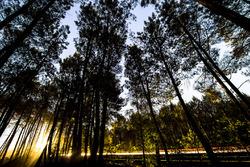 La lumière à travers les arbes