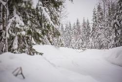 Ambiance du Rallye de Suède