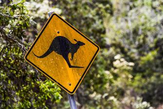 Avustralya Rallisi atmosfer - kanguru-uyarısı