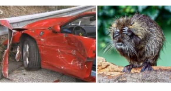 Kirpinin Ferrari'ye zararı 100 bin dolar oldu