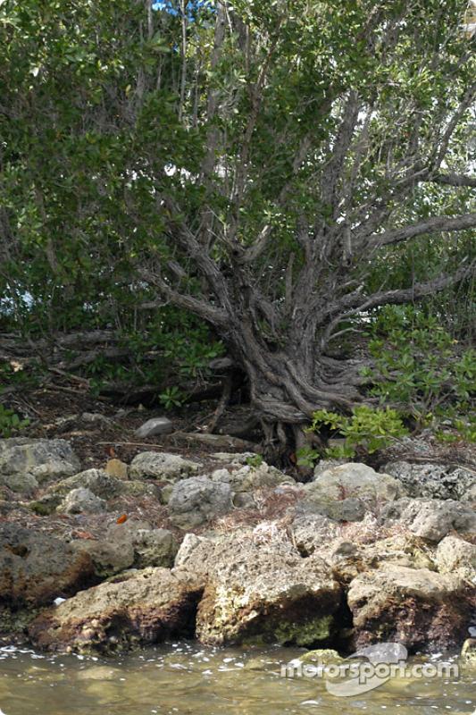 Une visite au parc national de Biscayne