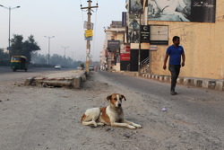 A dog in the street