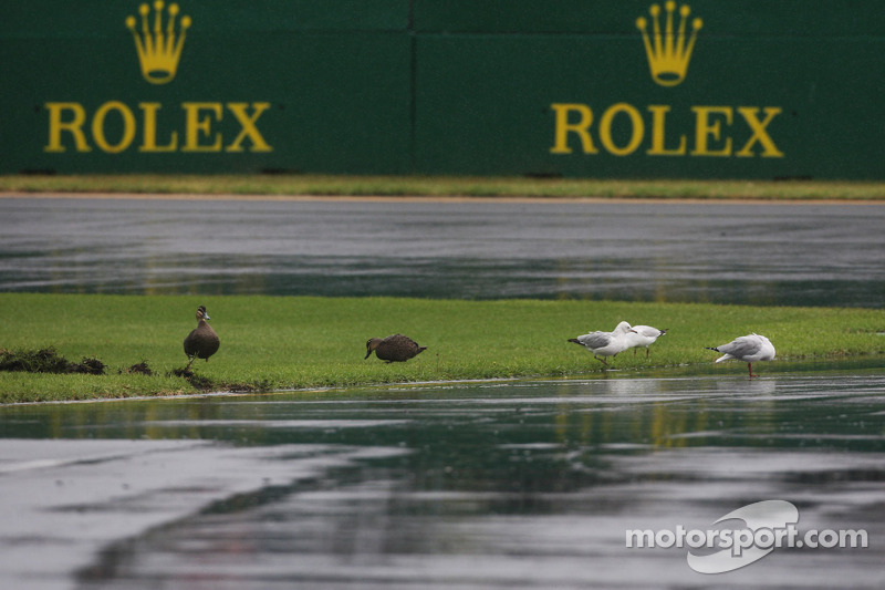 Nice weather for ducks and seagulls