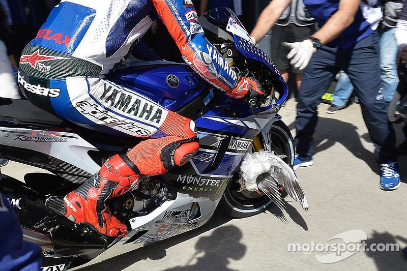 Een vogel ziet vast in het wiel van Jorge Lorenzo, Yamaha Factory Racing