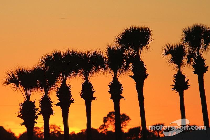 Le famose palme Sebring