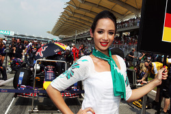 Grid girl for Sebastian Vettel, Red Bull Racing RB10