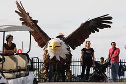 Aquila gigante