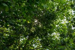 Licht im französischen Wald vor dem Qualifying am Donnerstag