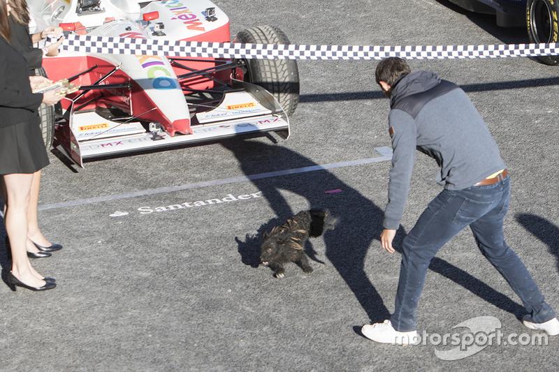 Um pequeno cachorro invade a pista