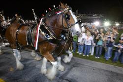 The Budweiser horse carriage