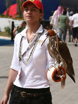 A woman with a falcon in the paddock