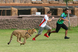 Filipe Albuquerque, driver of A1 Team Portugal and Adrian Zaugg, driver of A1 Team South Africa try to race a cheetah at the Rhino and Lion Nature Reserve