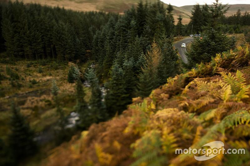 منظر الغابات