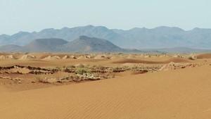 Rally Dakar 2013: Helder Rodrigues Profile