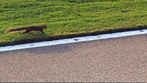 Squirrel wreaks havoc during Cup race - 2014 Atlanta