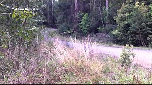 سيباستيان أوجييه كاد يتعرّض لحادث خطير في تحضيرات رالي أستراليا 2015